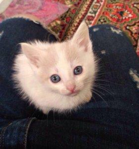 Котята 1,5 мес. в дар