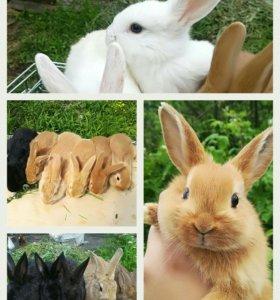 Кролики разных возрастов.