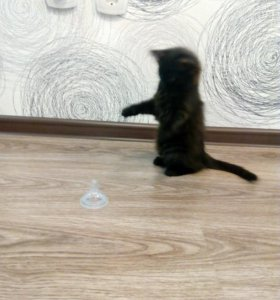 Котёнок очень красивый и умный