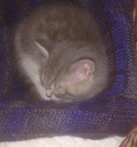 Кошачка Маша ищет хозяев