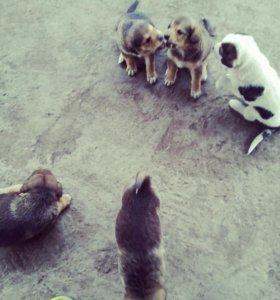 Продам щенят