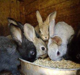 Кролики, мясо кролика !