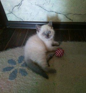 Котёнок очаровашка