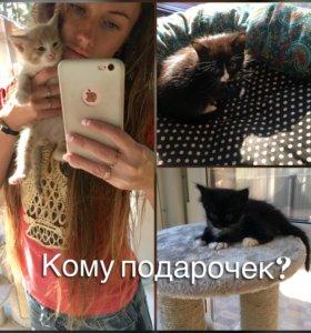 Котёнок в подарок