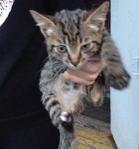 Отдам в хорошие руки котят девочку и мальчика