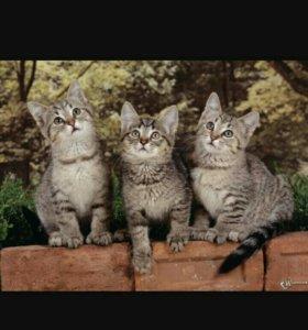 Отдам даром 3 котят