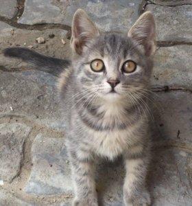 Котёнок даром