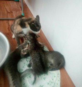 СРОЧНО)))Замечательные котята с мамочкой
