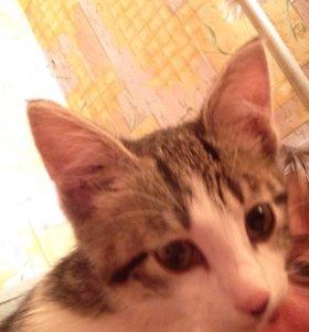 Потеряшка или новый хозяин для котёнка-девочки