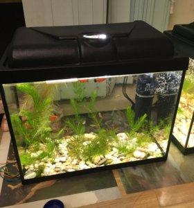 Освещение или подсветка аквариума аквариумистика