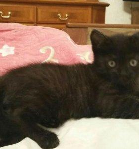 Котенок черненький мальчик