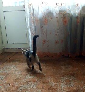 Отдадим котенка
