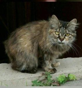 Кошечка бобтейл