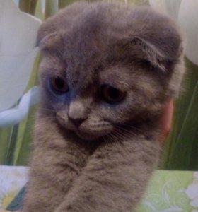 Кошечка алиментная