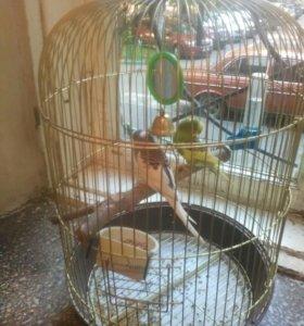 """Волнистые попугаи !!!!!"""""""