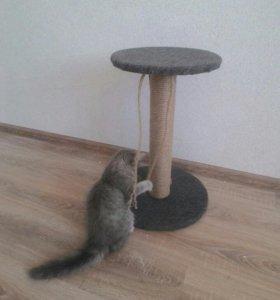 Подарок котенку