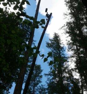 Удаления дерева