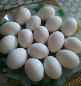 Яйца кур домашние