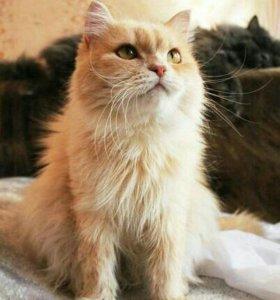 Кошка Софа в добрые руки