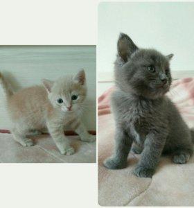 Котята/кошки/коты