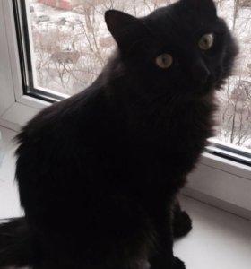 """Замечательный чёрный котик """"мейн-кун+дворовой"""" :)"""