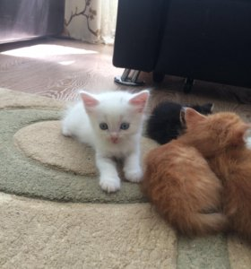 Очаровательные котята ищут хозяев.