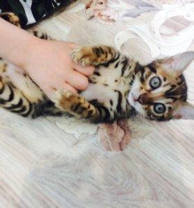 Мини-леопард