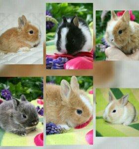 Берри и другие карликовые крольчата с прививками