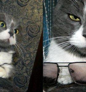 Кот нв вязку