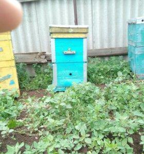 Улья,домики для пчёл.