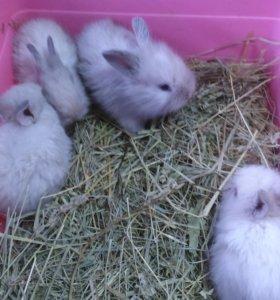 Малыши - Голубоглазые Декоративные Кролики
