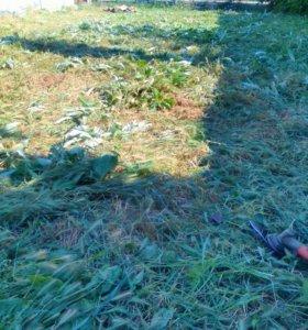Покос травы от 100 руб и травим