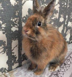 Кролик-мальчик для вязки
