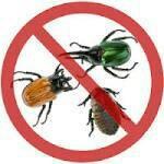 Обработка территории от комаров,  клещей