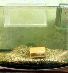 Аквариум 60 литров с цихлидами