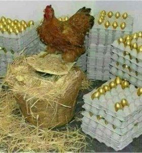 Импортное инкубационное яйцо