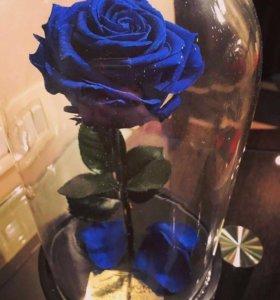 Роза в колбе🌹😍