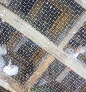 Много крольчат