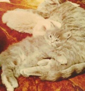Добрые и пушистые котята