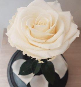 Роза в колбе white