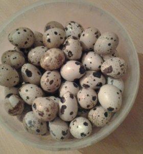 Яйцо перепелиное столовое