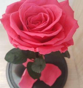 Роза в колбе shocking pink