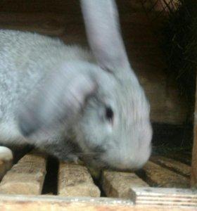 Мясо молодых кроликов