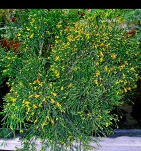 Комнатные цветы (отростки)