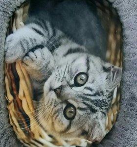Лежанка. Кошка.