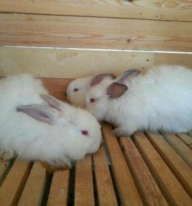 Кролики пуховые