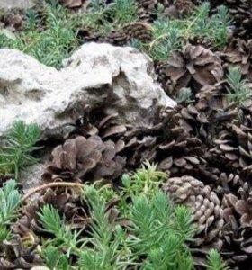 Мульча из сосновых шишек мешок 60литров