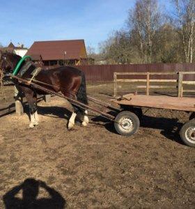 Лошадь Орловский Рысак