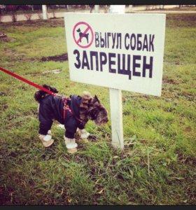 Комбинезон для собачки