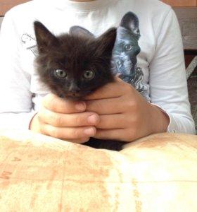 Котёнок . В добрые руки